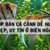 Top 9 shop bán Cá cảnh Dễ nuôi Đẹp Uy Tín ở Biên Hòa
