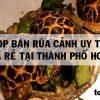 Top 5 shop bán Rùa cảnh Đẹp Giá rẻ Uy Tín ở TPHCM