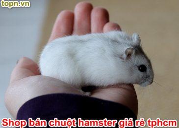 Top 5 shop bán Chuột Hamster giá rẻ Đáng yêu ở TPHCM