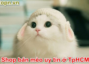 Top 5 shop bán Mèo con Cưng & Uy Tín ở Tphcm