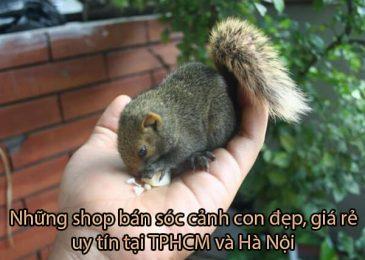 Top 6 shop bán Sóc Cảnh Đẹp Xinh Xắn Giá Rẻ ở TPHCM và Hà Nội