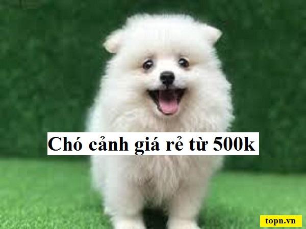Top 10 loài chó cảnh giá từ 500 nghìn đồng được nuôi nhiều nhất