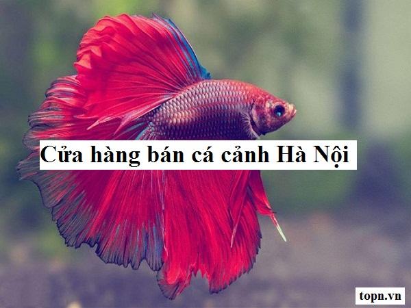 Top 8 cửa hàng bán cá cảnh giá rẻ đẹp dễ nuôi ở Hà Nội