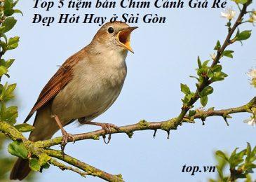 Top 4 tiệm bán Chim Cảnh Giá Rẻ Đẹp Hót Hay ở Sài Gòn