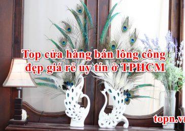 Top 7 cửa hàng bán lông công đẹp giá rẻ uy tín ở TPHCM